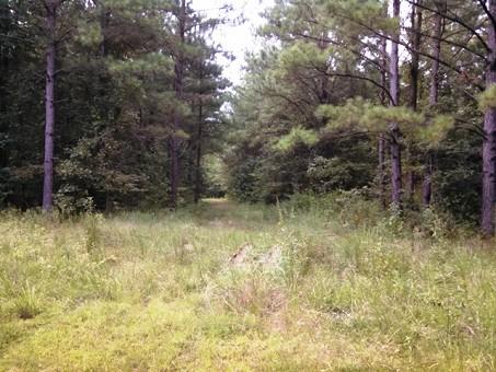 80 Acres Of Timberland Near Starkville, Ms