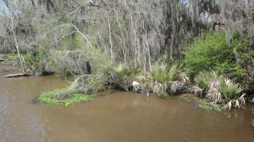 Waterfront Lot Tickfaw River Killian Louisiana