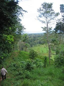 Large Titled Farm, Great Below Market Price, Mainland Panama