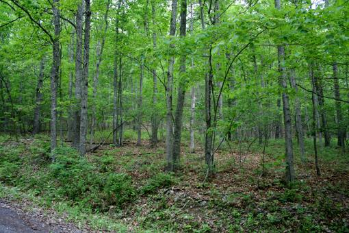 5.44 Acres On The Mountain In Highland County