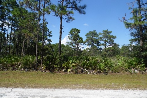 Lot For Sale, Polk County, Central Florida