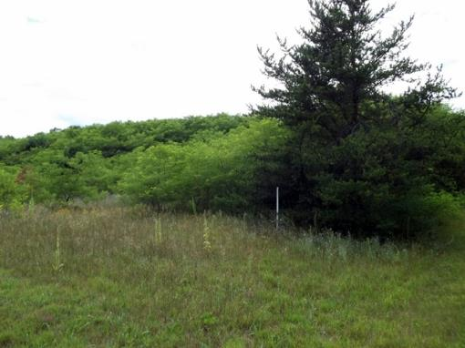 Vacant Lot, Land for Sale In Saxeville WI