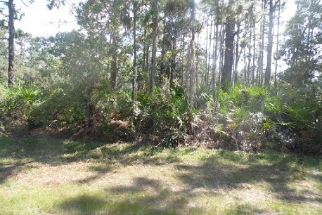 VACANT LAND FOR SALE, CENTRAL FLORIDA