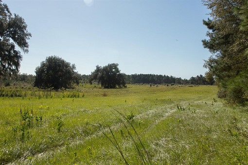 Suwannee River Hunting Property For Sale Live Oak