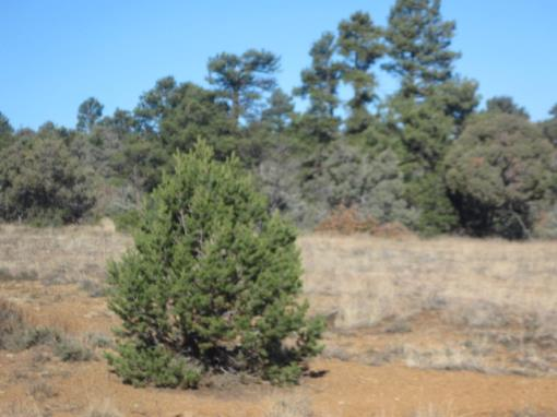 Trees/Meadows/Secluded/Near Lakes/Northern NM