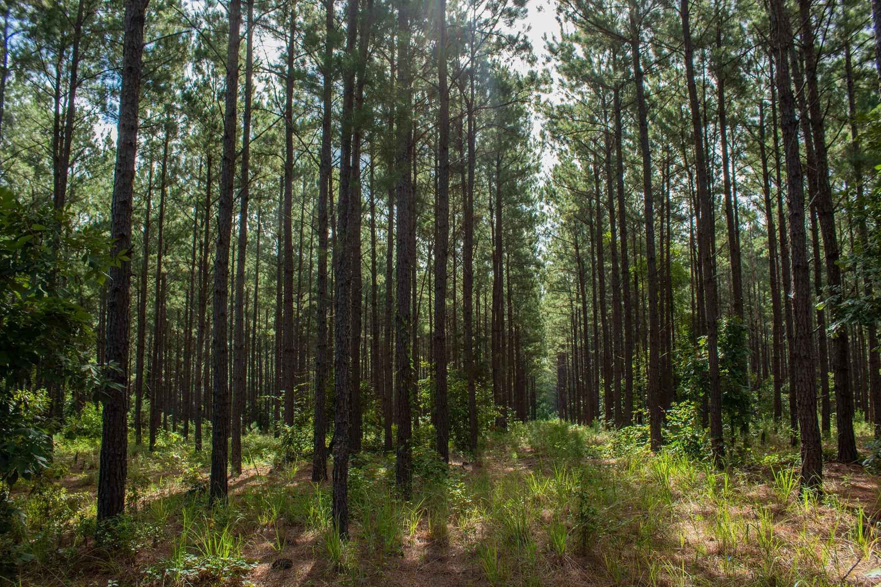 145.3 ACRES TIMBER HUNTING RECREATION LAND FOR SALE $2400/ac