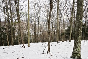 TIOGA HUNTING LAND FOR SALE AT AUCTION