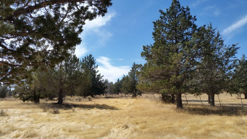 California acreage with well & wildlife for sale!