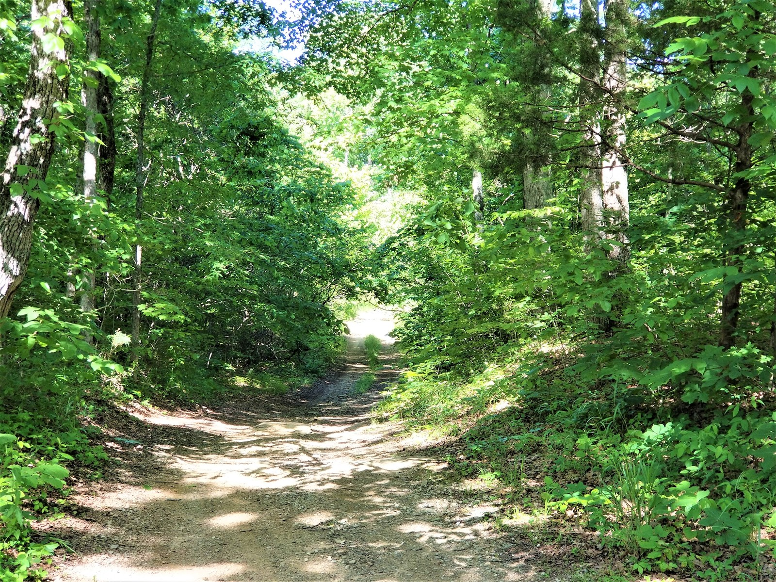 Timber, Wooded, Creek Frontage In Metcalfe County, Ky