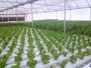 COMMERCIAL GREENHOUSE BUSINESS & HOME ON 160 ACRES PRIME CRP