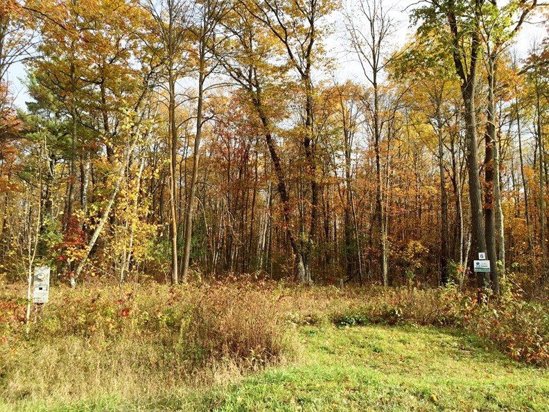 Wooded lot for sale / mature trees / buildable / Sandstone