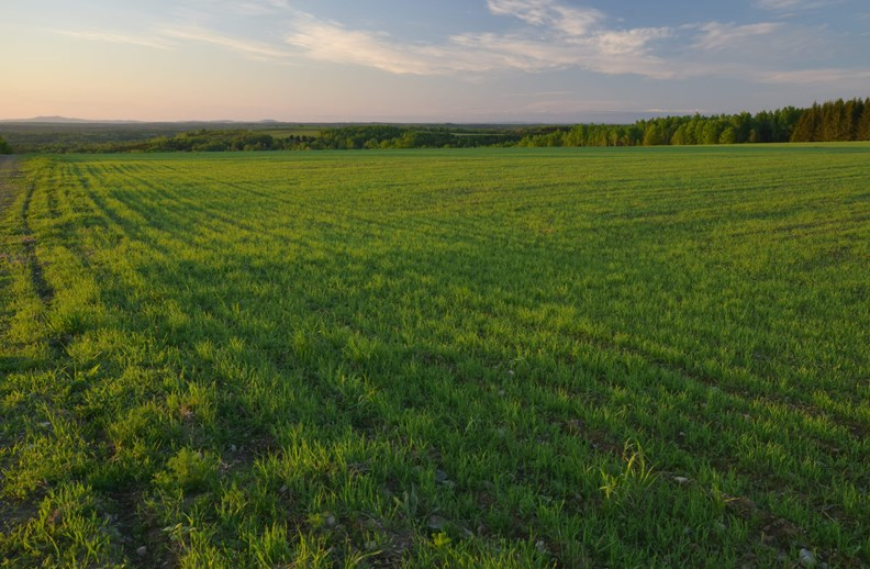 Maine Farm Land for Sale in Cyr Plantation