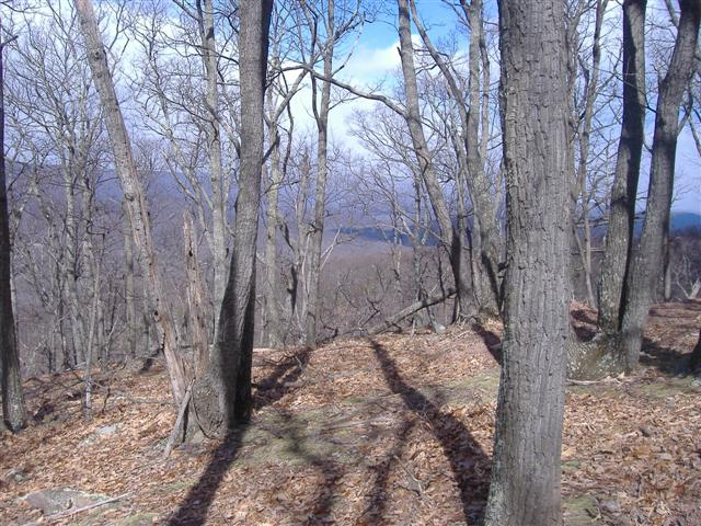 Land For Sale in Shanks, WV