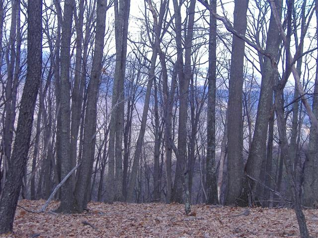 Land For Sale in Shanks, WV - Hampshire County
