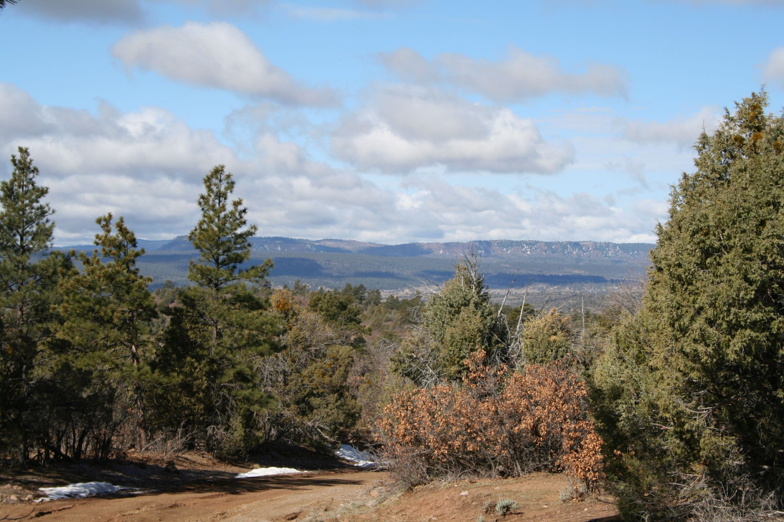 ROCKY MT & VALLEY VIEWS/NORTH NM/LEVEL SITE/TALL PINES