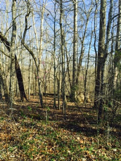Land for sale close to Dale Hollow Lake, Albany, KY