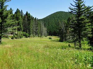 CENTRAL MONTANA MOUNTAIN LAND FOR SALE FERGUS COUNTY