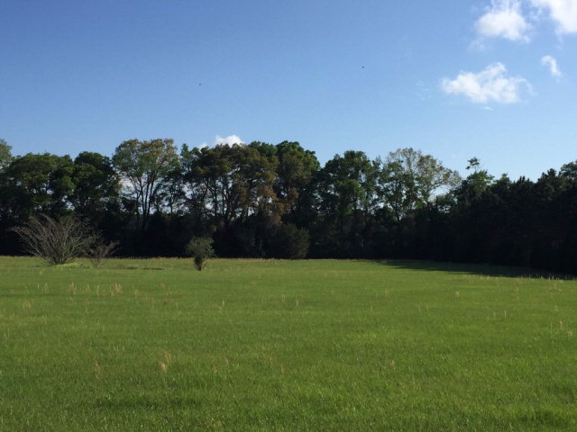 HORSE LOVERS DREAM - Homes Only Subdivision Trenton FL