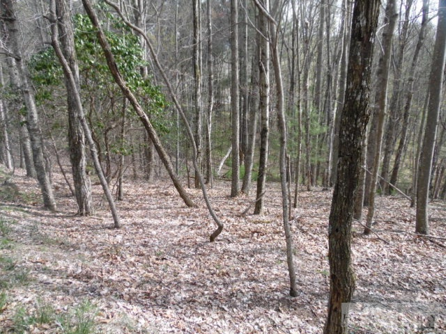 Mountain Lot, Wooded & Sloping, Sparta, NC.