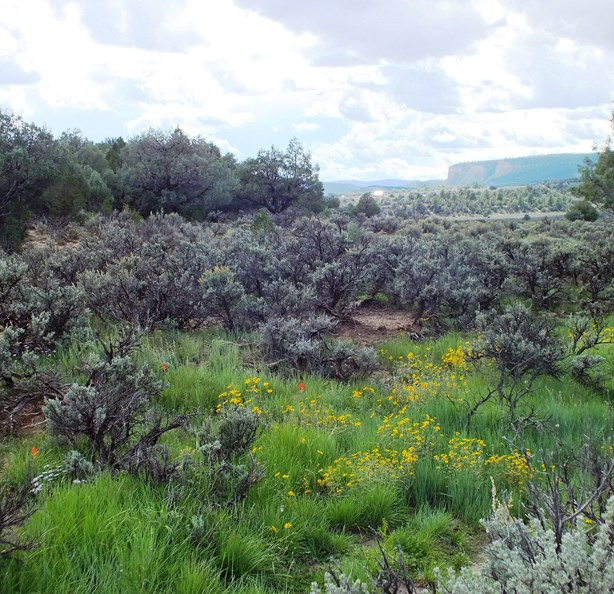 NEAR 2 LAKES/NORTH NM/SEASONAL POND/MEADOW-PASTURE/VIEWS