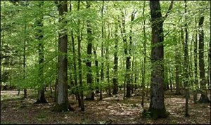 46 ACRES IN TIOGA COUNTY FOR SALE