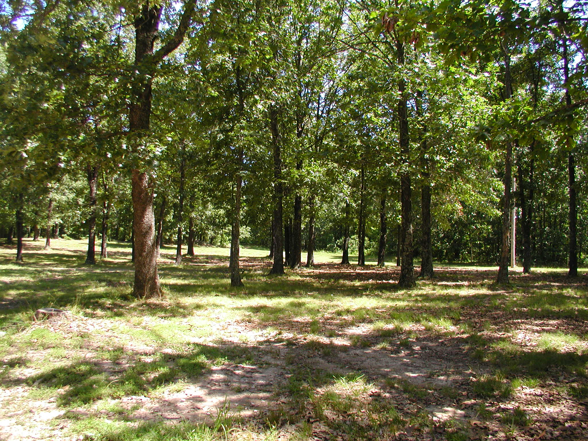 WOODED COUNTRY SUBDIVISION ACREAGE - READY TO BUILD!