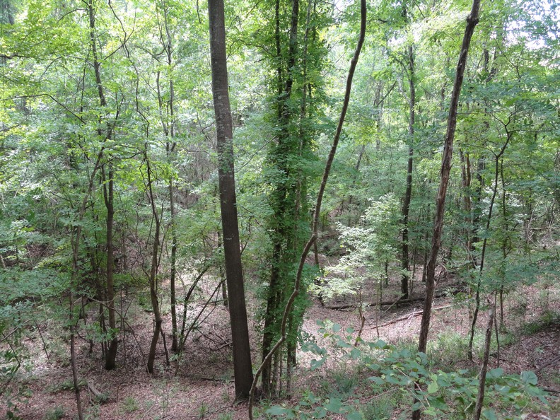 Hunting Land for Sale Homochitto National Forest Mississippi