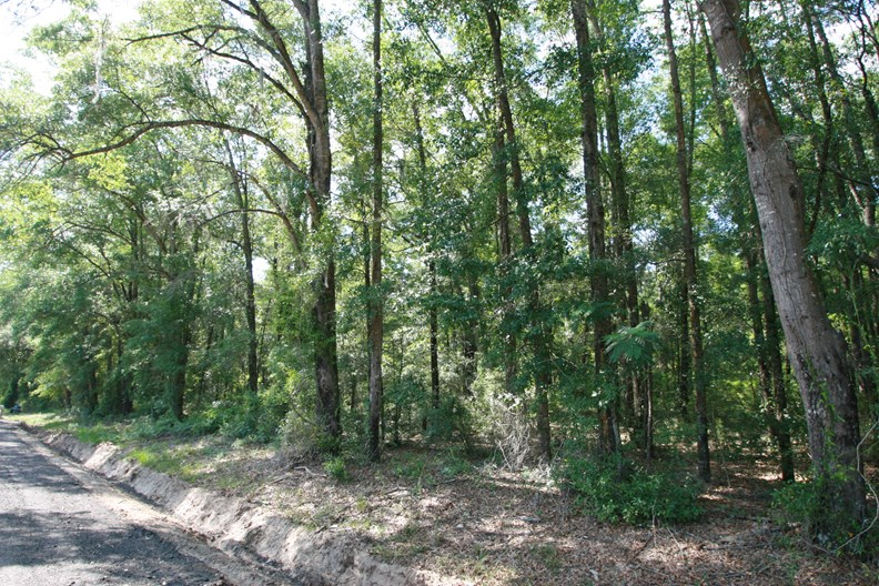 N FL, Wooded Acreage, Near White Springs, For Sale