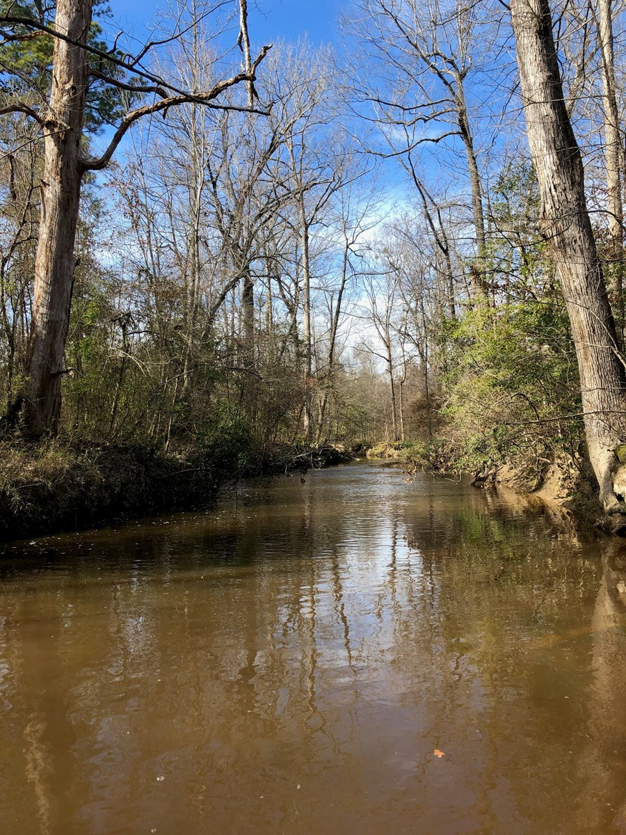 Recreation Hunting Timberland for Sale in Dallas County, AR