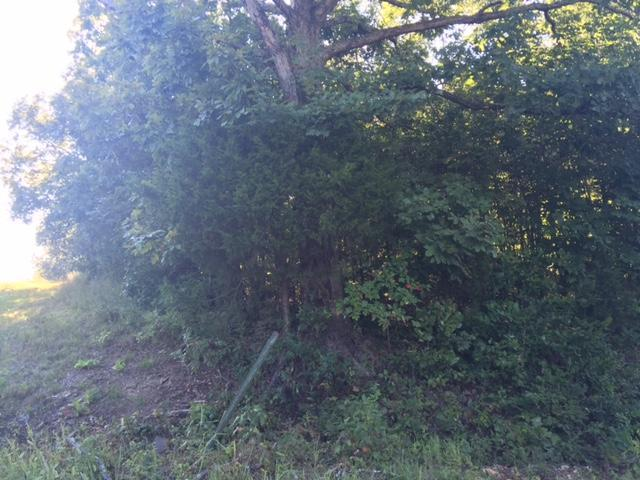 Land For Sale in Thayer Missouri
