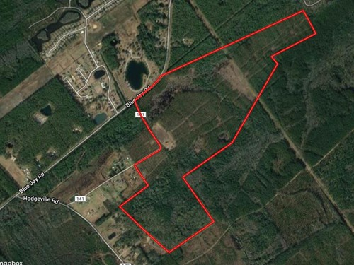 Wooded Acreage For Sale In Effingham County, GA