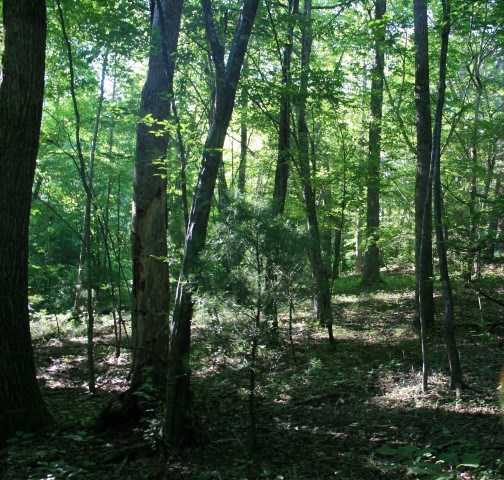 17.74  ACRES IN PATRICK COUNTY, VIRGINIA