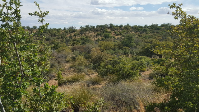 AVAILABLE LAND FOR SALE IN SILVER CITY, NEW MEXICO