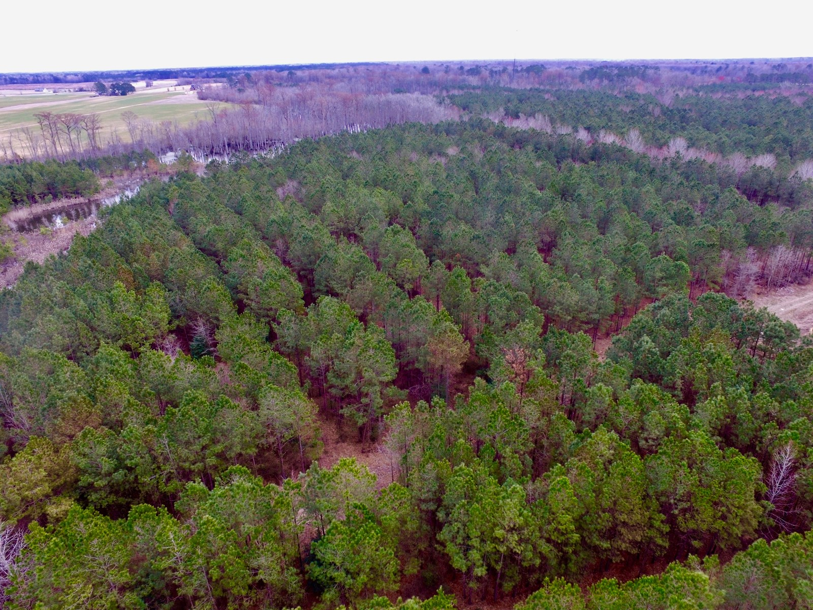 Timber Tract For Sale Pitt County, NC/Recreational Property