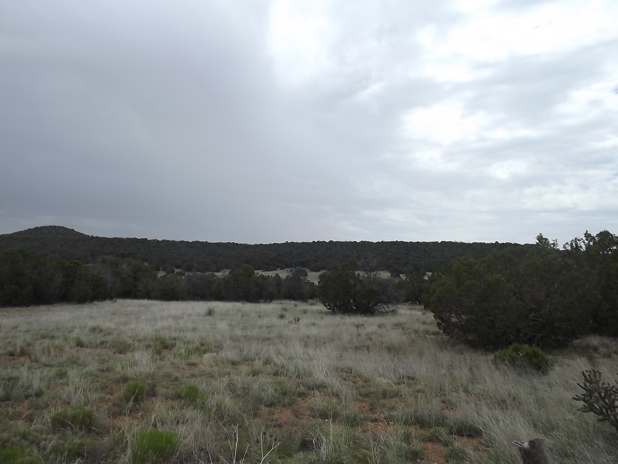 Central New Mexico 80 Acre Manzano Mountain Property
