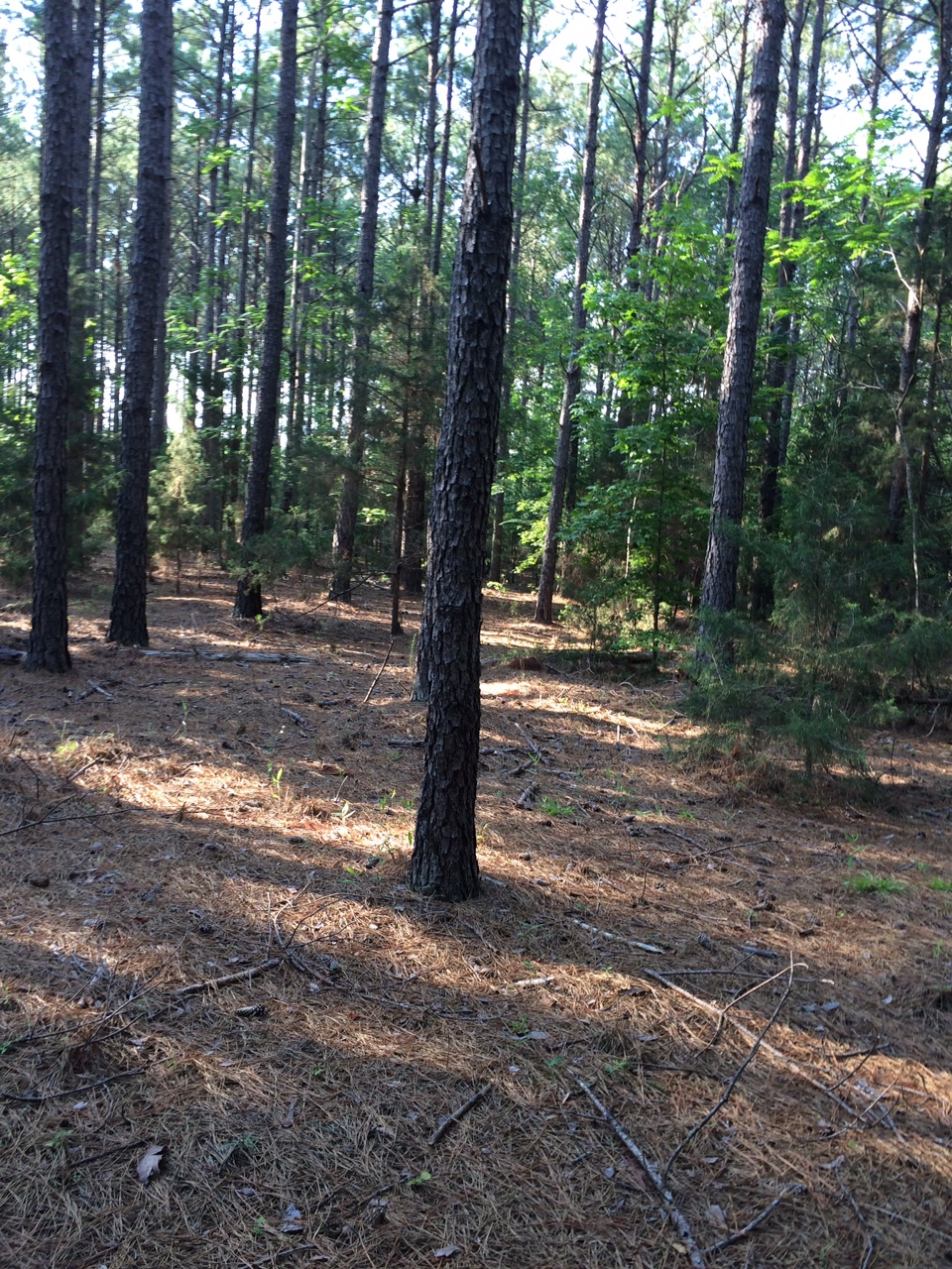 LAKE MONTICELLO SC BUILDING LOT
