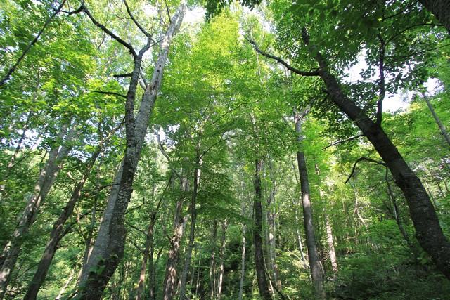 Wooded Tract for Sale in Blue Ridge Mountains