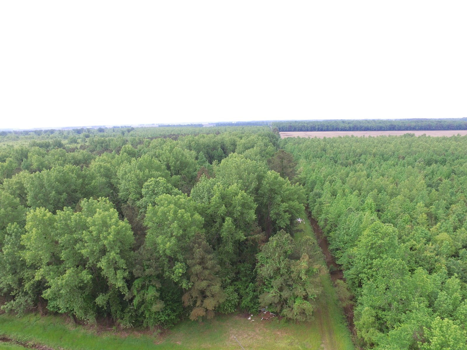 NC 1000 Acre Timber Tract For Sale in Beaufort County