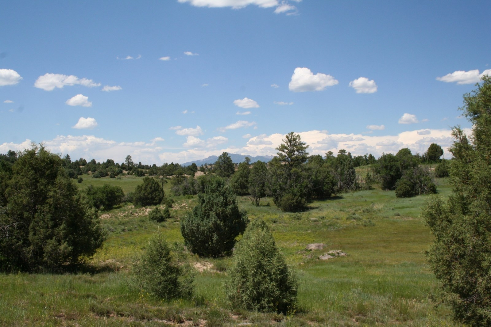 Chama New Mexico Property for Sale with Power and Water