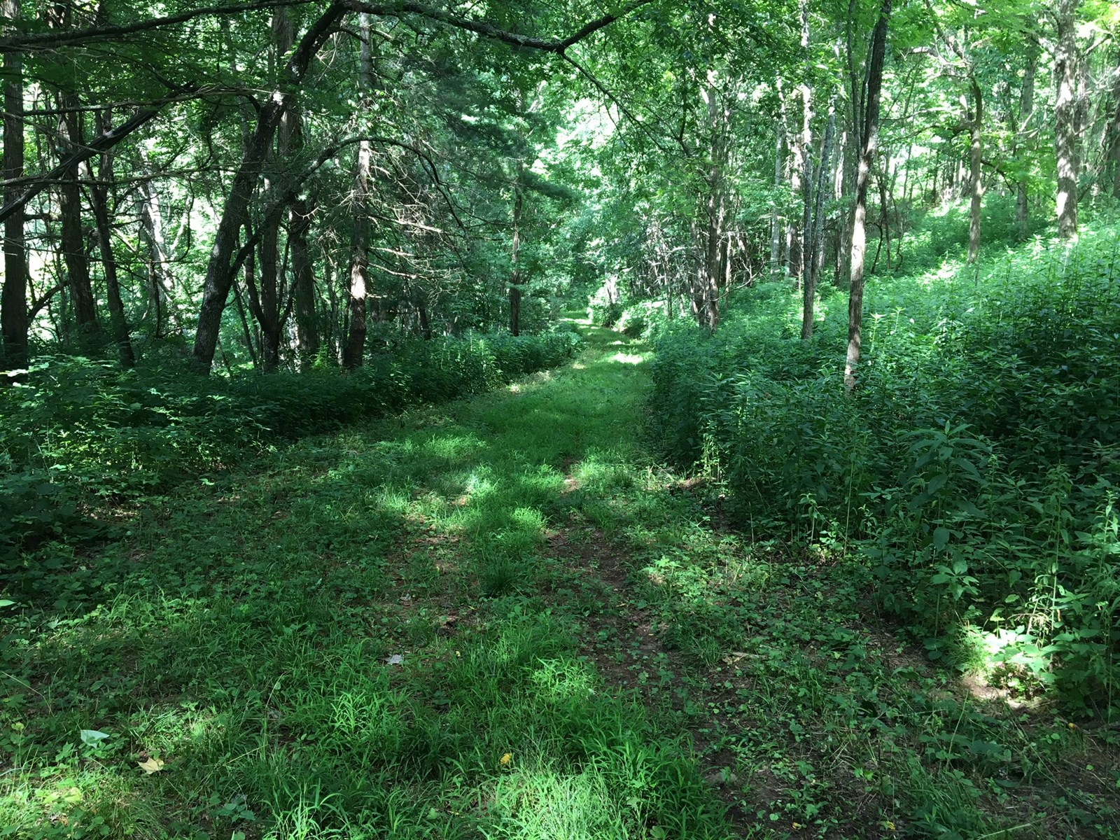 Existing Logging Trails