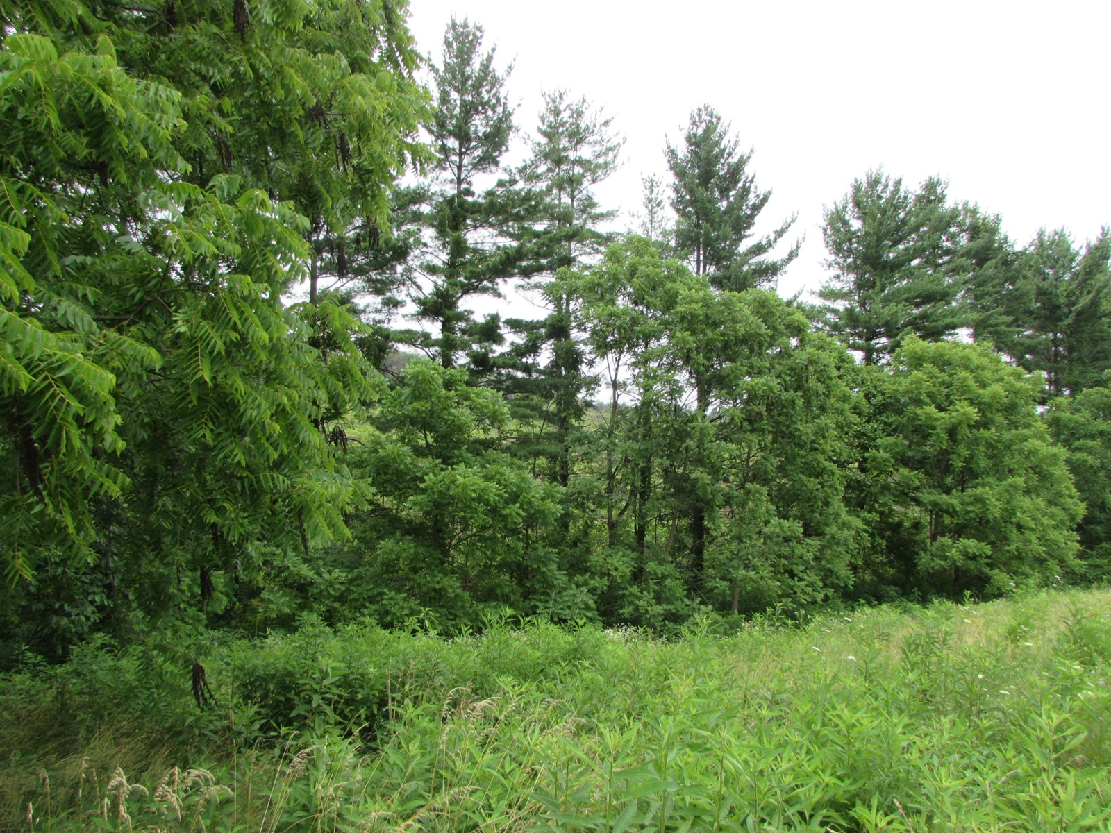 54.375 Acres off Brownsville Rd in New Matamoras Ohio