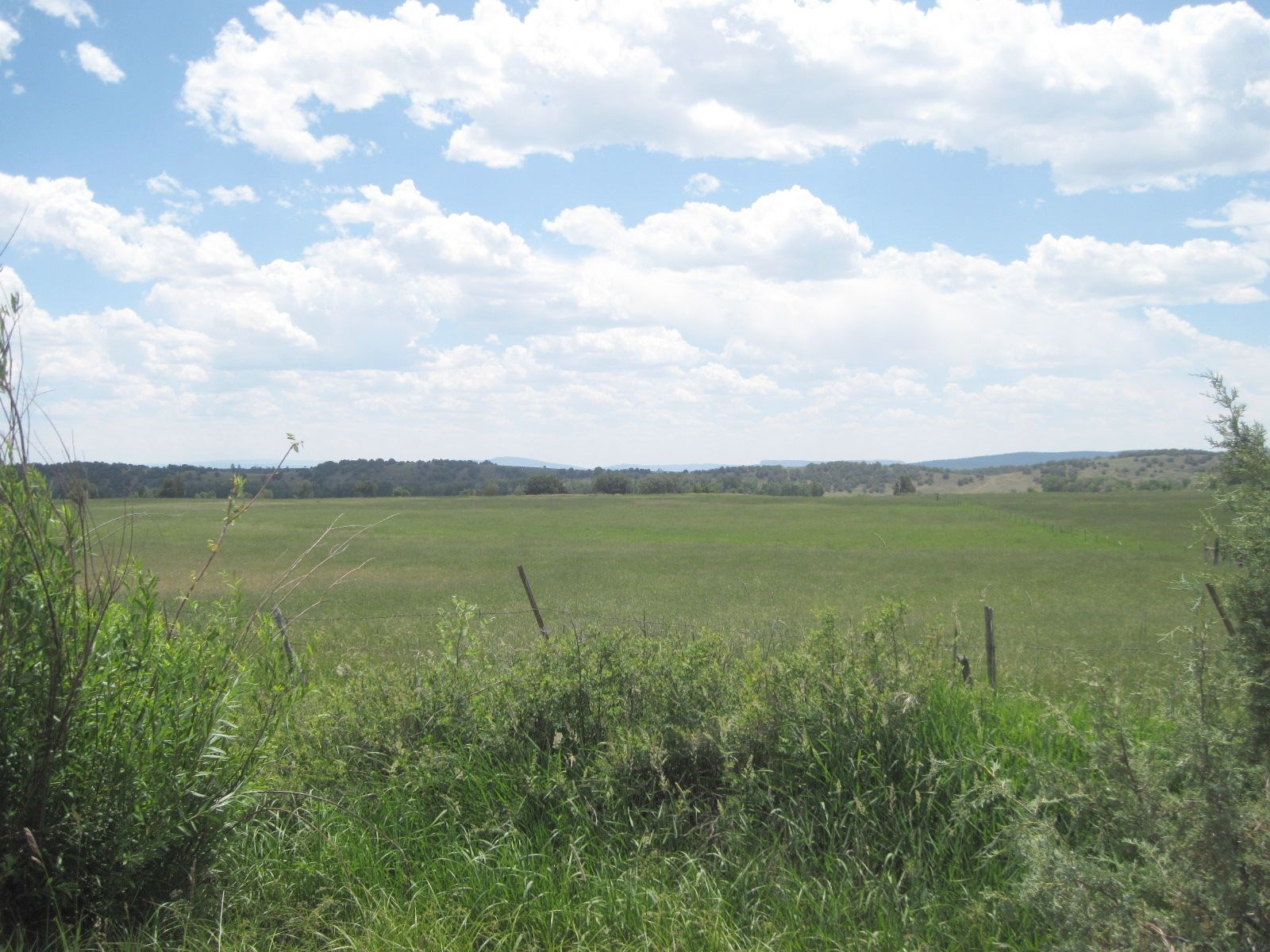 NORTHERN NM PASTURE 8.8 ACRES WATER RIGHTS CATTLE HORSES