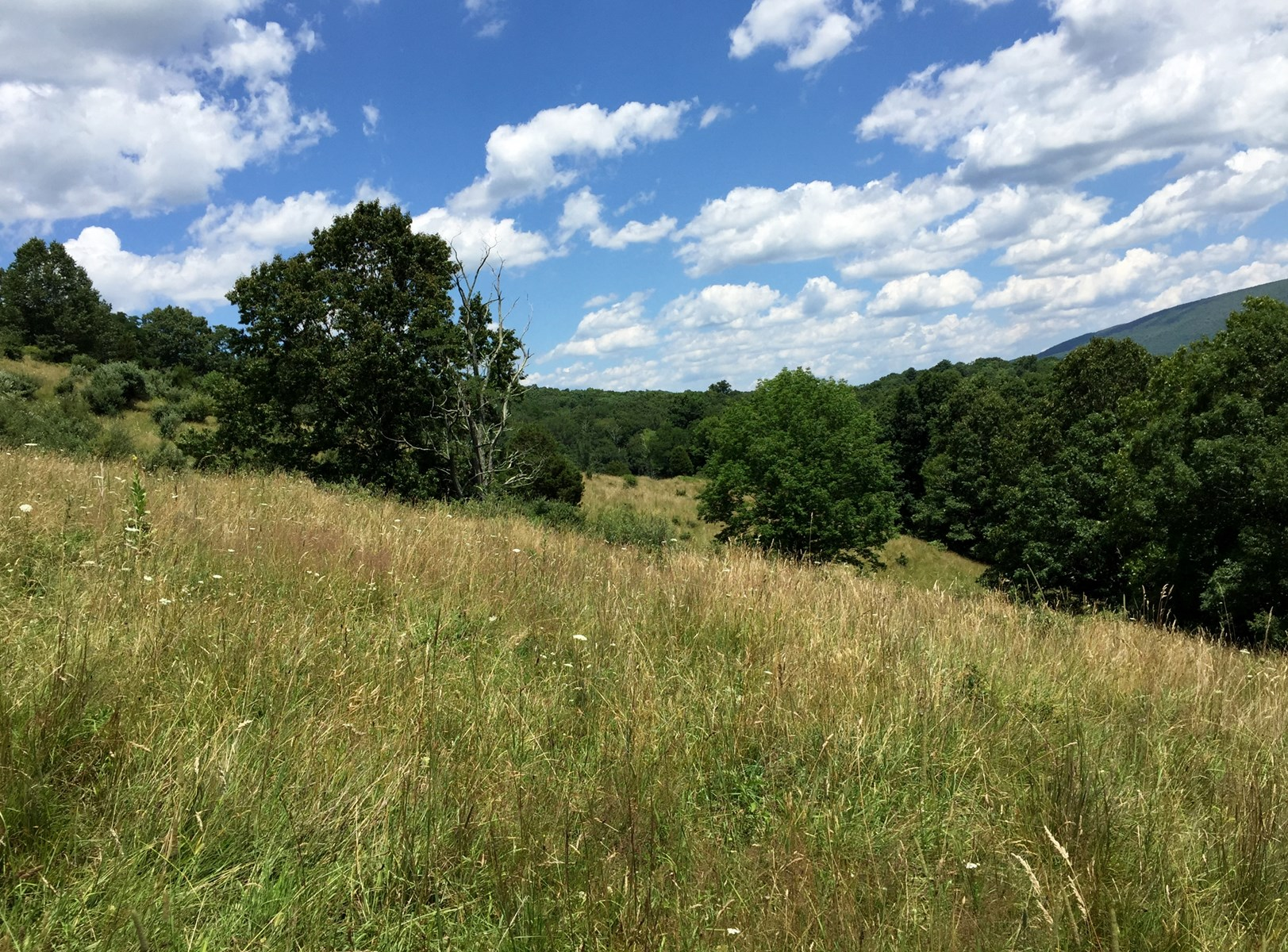 Join us in Highland County VA on this 170 acres