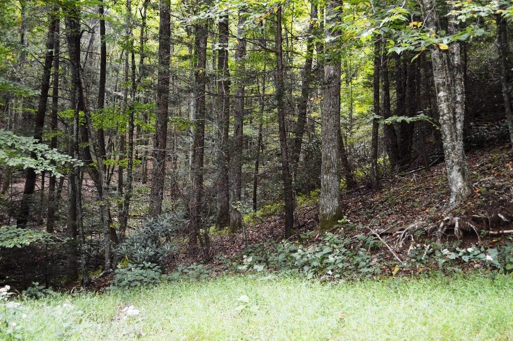 BEAUTIFUL WOODED MOUNTAIN LAND, SPARTA, NC. 3+ ACRES!