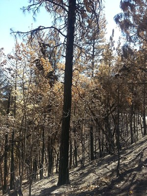 GAP FIRE TIMBER LOGGING PROPERTY FOR SALE NEAR SEIAD VALLEY