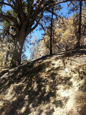 SEIAD VALLEY GAP FIRE TIMBER PROPERTY FOR SALE