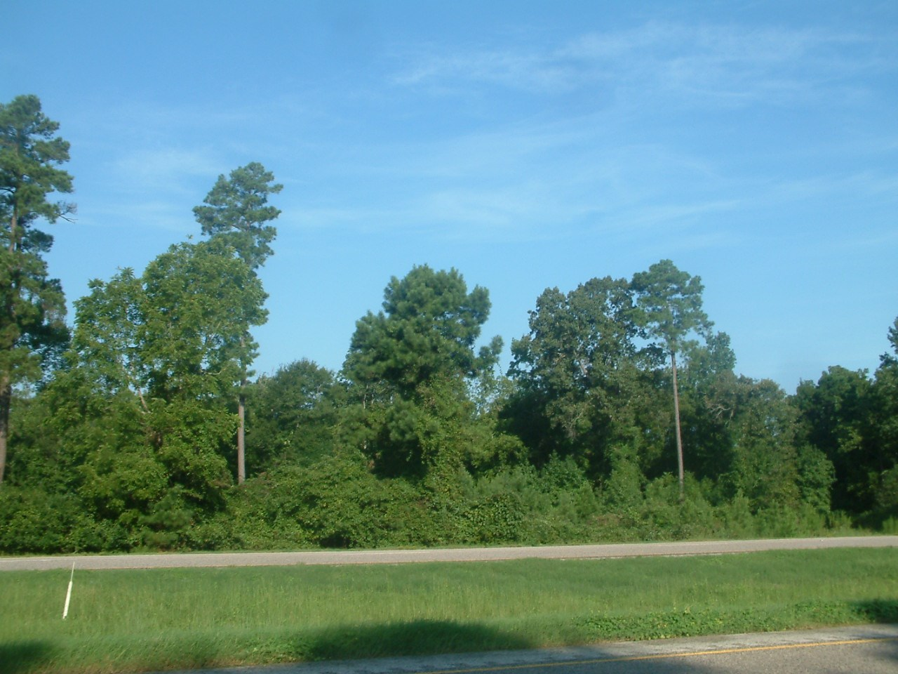 110 Acres Wooded Recreational Hunting Land For Sale Rusk Co