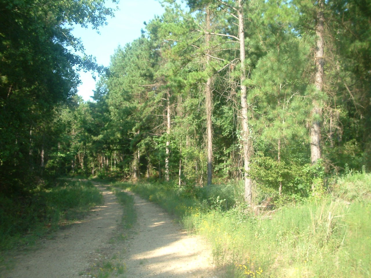 233 AC HUNTING RECREATION TIMBER LAND FOR SALE RUSK COUNTY