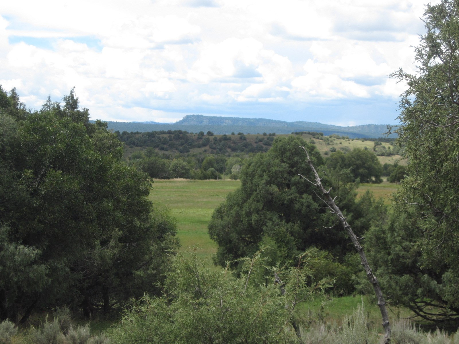 NORTHERN NM MOUNTAIN PASTURE FOR SALE IRRIGATION RIGHTS
