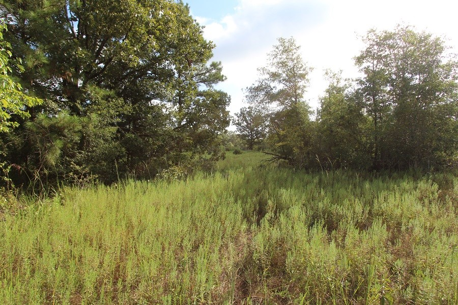 Recreational and Hunting Land for Sale Clarksville TX